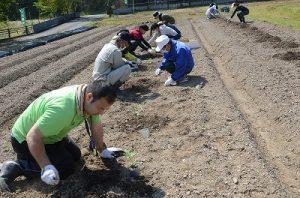肥料やりや苗植えをしている写真