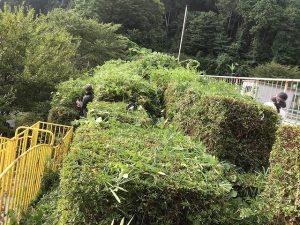 植木の刈り込み作業