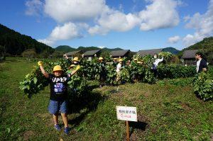 黒枝豆を収穫 集合写真