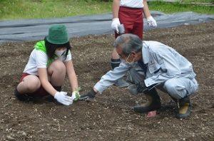 スイカの苗植えする児童